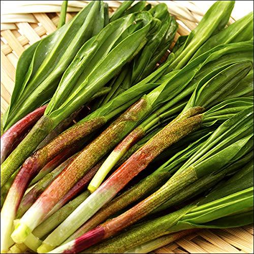 北海道産 山菜 天然 行者にんにく(5kg入り) 行者ニンニク キトビロ 北海道 お取り寄せ