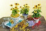 Dekosteine burgund 1 Kg Größe ca. 9mm - 13mm - Deko Steine für Haus und Garten günstig zu kaufen - Streudeko / Tischdekoration (creme) - 2