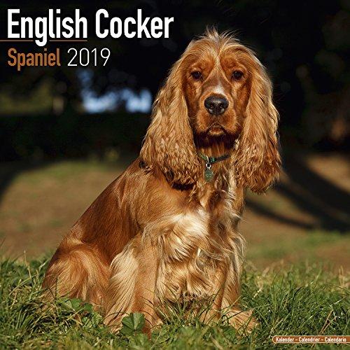 English Cocker Spaniel Calendar 2019