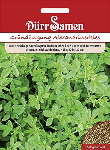 Dürr Samen - Gründüngung Alexandrinerklee, 50g