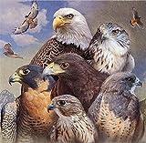 N\A Pintar por Numeros Niños con Cepillos DIY Pintura Al Óleo Kit | para Manualidades - Águila, Vida Silvestre 40X50Cm