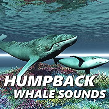 Humpback Whale Sounds
