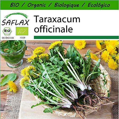 SAFLAX - Ecológico - Diente de león - 400 semillas - Con sustrato estéril para cultivo - Taraxacum officinale