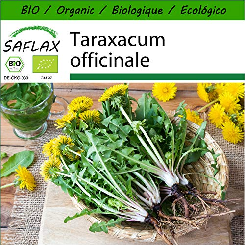 SAFLAX - BIO - Pissenlit - 400 graines - Avec substrat de culture aseptique - Taraxacum officinale
