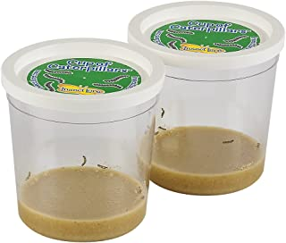 Insect Lore Live Cup of 10 Caterpillars to Butterflies - Butterfly Growing Kit REFILL - SHIP NOW