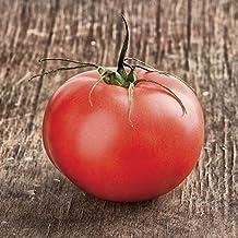 100 semillas Semillas de tomate híbrido Beefmaster vid indeterminado es increíblemente pesada que soporta