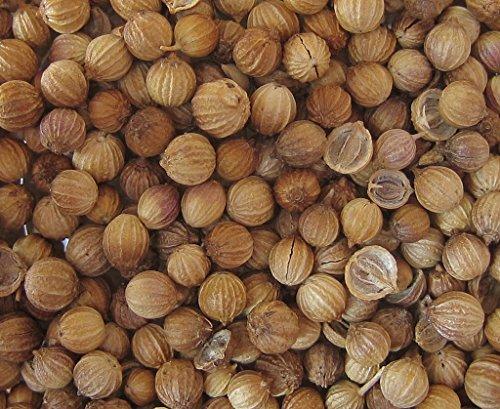 30 graines Bio Aromatiques - CORIANDRE Cultivée - Certifié AB - Coriandrum sativum