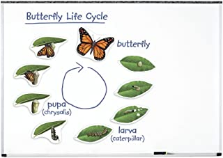 Learning Resources Butterfly Life Cycle Foam Magnets44; Assorted Sizes44; Set - 9