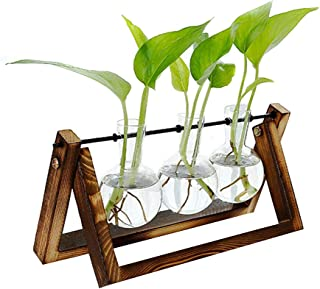 Leorealko Hydroponic Glass pots,hydroponic Plants,Tabletop Plants,Hydroponic Glass Planter Bulb Vase with Wooden Stand Tra...
