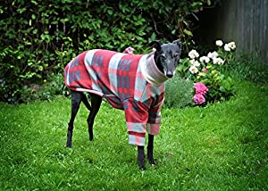 Magnifique Lévrier Whippet, Lévrier en polaire pijamas (My Chiens les Porter à l'extérieur trop).