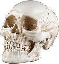 JNKET Creative Resin Skull Realistic Human Skeleton Head Halloween Decor Adult Skull Model for Home Decor