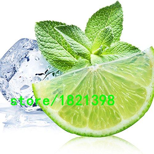 Semences de la plante essentielle de menthe citron semences supérieur pour Herbal Tea balcon semences de légume en pot de citron menthe semences 200pcs