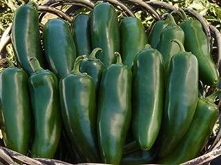 Mammoth F1 Hybrid Jalapeno Hot Pepper Seeds (25 Seeds)