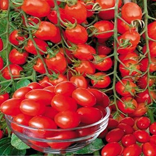 SwansGreen A Pack 100 seeds Bonsai Tomato seeds Mini Cherry Potted Sweet Fruit Vegetable Organic Fresh
