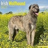 Irish Wolfhound Calendar 2021,...
