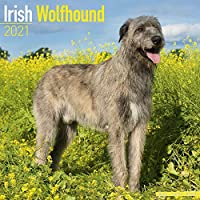 Irish Wolfhound 2021 Wall Calendar