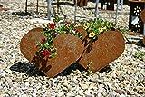 RDI Pflanzschale Herz doppelt Edelrost, Rostiges Metall, Blumentopf, Gartendeko, Pflanzgefäß