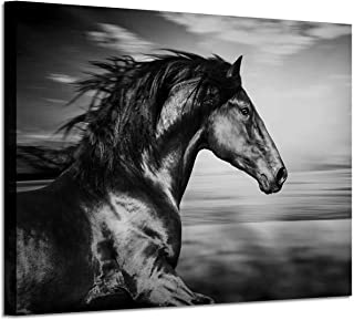 Horse Picture Animal Art Prints: Wild Black Stallion Graphic Artwork on Canvas (36'' x 24'') for Walls