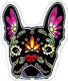 Cali French Bulldog, Sugar Skull Dog - 4.13