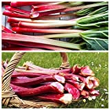Ruibarbo - Conjunto de Semillas de 2 Variedades de Plantas Vegetales -
