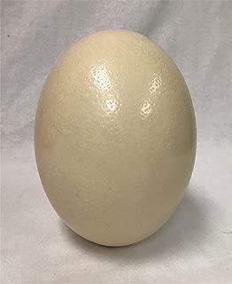 American Feathers Ostrich Eggshells - Premium Grade A