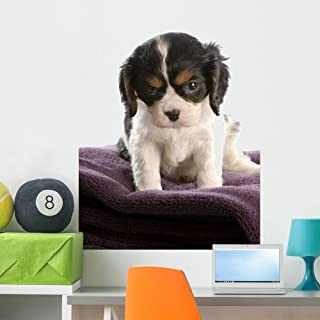 Wallmonkeys Six Week Old Tri Color Cavalier King Charles Spaniel Puppy Wall Decal Peel and Stick Graphic WM14763 (36 in H x 26 in W)