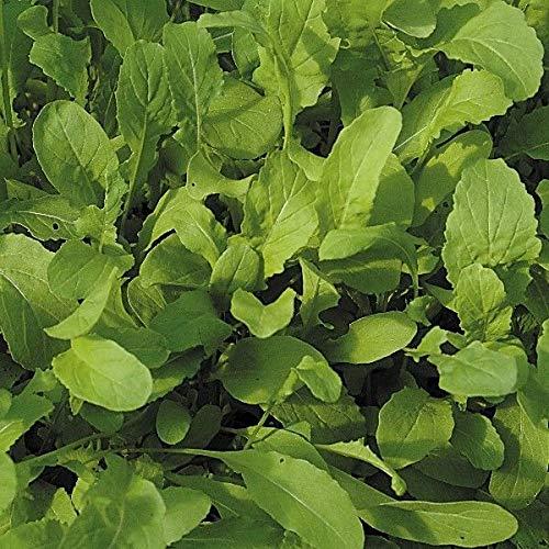 Portal Cool Suffolk Herbes - Graines Bio Germination Rocket - 30G Seeds