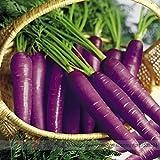 Pinkdose2018 Hot Sale Haze 'semillas de zanahoria morada, paquete profesional, 100 semillas/paquete, semillas raras # NF942