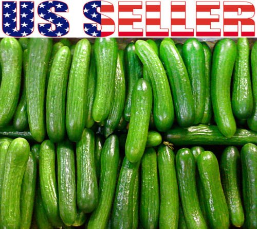 30 Persian Beit Alpha Cucumber Seeds Heirloom NON-GMO Crispy and Sweet Grown in the USA
