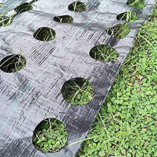 OriginA Weed Control Fabric Planting Holes - Ground Cover Weed Barrier - Eco-Friendly for Vegetable Garden Landscape, 4 feet by 6 feet