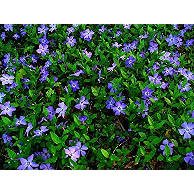 ground cover plants, End of 'Related searches' list