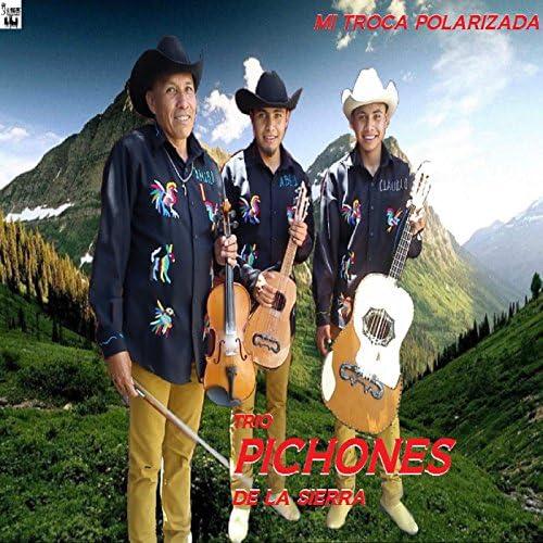Trio Pichones De La Sierra