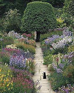 The Garden Cat by Greg Gawlowski Animals Gardens Flowers Landscapes Print Poster 11×14