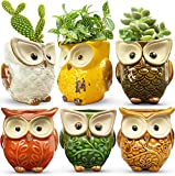 HOMESCAPE CREATIONS Owl Succulent Animal Planter Pot - 2.6 Inch Small Ceramic Glaze Container with Drainage - Tiny Holder for Plants, Flowers, Cactus - Cute Gift Set of 6