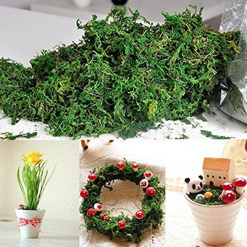 Musgo seco Kungfu Mall con flores secas, tipo liquen de los renos, para decoraciones, cestos y...