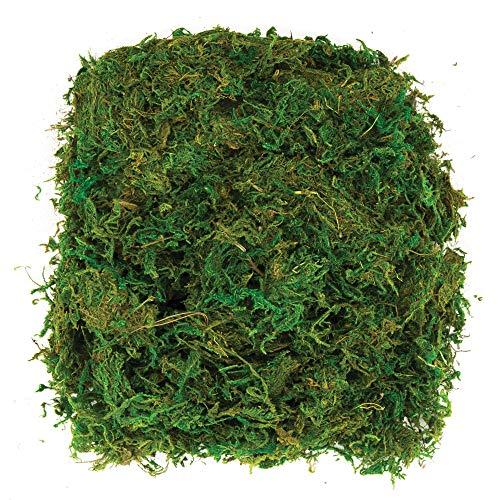 Baker Ross Av898Dried Moss (100 g Por Paquete) la Fabricación Coronas, Actividas Artísticas Y