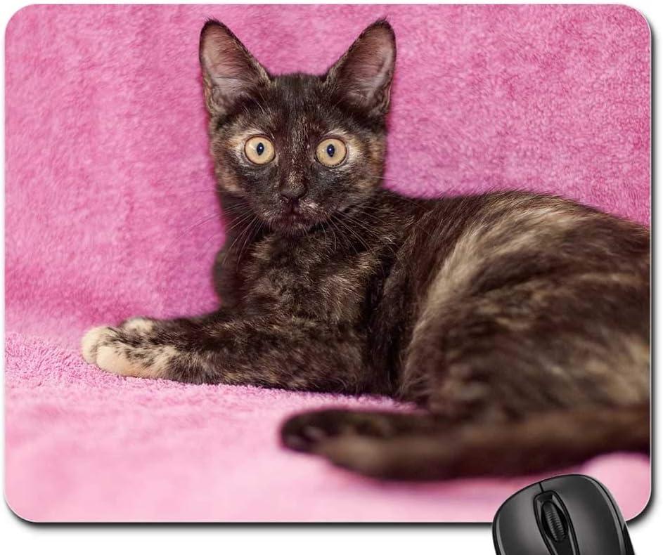 Mouse Pad Topics on TV trust - Cat Feline Small Kitty Pet Domestic Cute