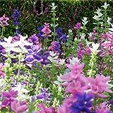 salvia blue mix plants seeds 30pcs salvia japonica biologica salvia tropicale salvia splendens fresco facile da coltivare piante da fiore alle erbe semi per piantare giardino giardino all'aperto