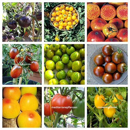 Historische Tomaten, 20 Sorten, getrennt verpackt, von unserer Farm, 200 Samen,von unserer ungarischen Farm samenfest, nur natürliche Dünger, KEINE Pesztizide, BIO hu-öko-01
