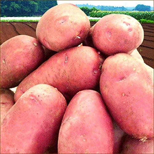 北海道産 新じゃが じゃがいも レッドムーン 訳あり 10kg (ご家庭用) 野菜 北海道 お取り寄せ