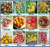 Tomatensamen Sortiment, seltene alte Sorten, samenfest und Kältetolerant, für kurzen und kühleren Sommer gut geeignet, Rarität