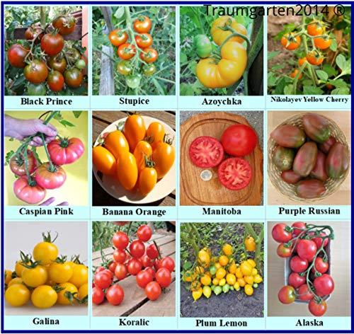Tomaten Set Kältetolerant : In Deutschland angebaut, Premium Saatgut, ohne Gentechnik und Pestizide, 100% samenfest, diese 12 Tomatensorten sind bestens geeignet für kältere Regionen - Frühe Sorten