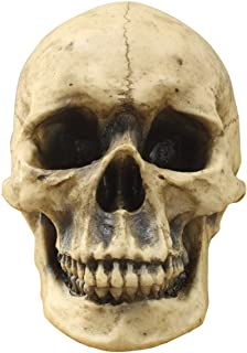 """Best Wallcharmers Wall Charmers Life Size Human Skull - 8.5"""" Realistic Faux Human Anatomy - Table Top Skeleton Head Home Decor Review"""