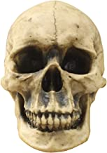 Wall Charmers Life Size Human Skull - 8.5