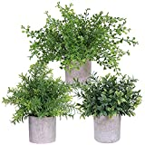 3 Pack Mini Potted Plants Artificial Green Eucalyptus Boxwood Rosemary Greenery in Pots Faux Potted Herbs Small Houseplants 8.4'-9.3' Tall for Indoor Greenery Home Bedroom Kitchen Farmhouse Decor
