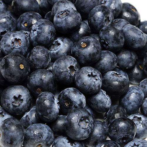 【クール便】大粒ブルーベリー 生食用 350g×4パック (群馬県 月夜野ブルーベリー) 産地直送 ふるさと21
