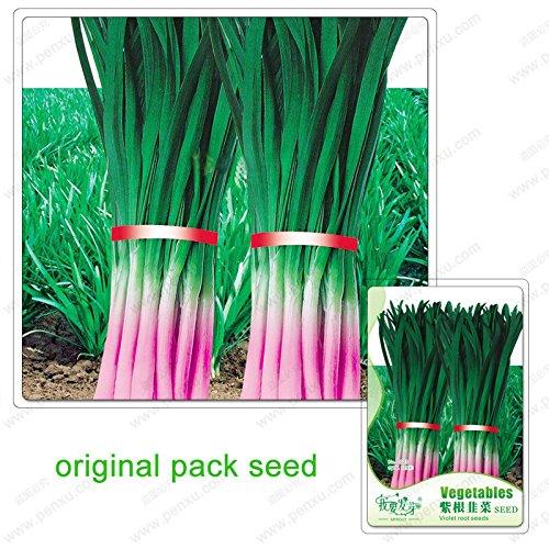 120 graines/Pack, graines de poireau racine pourpre, jardin potager à cultiver bio poireaux légumes impuissance
