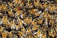 TLMYDD 蜂の昆虫のハイブ、大人のための木製のジグソーパズルのパズル3D教育玩具DIYホームデコレーション - 500個500個52 X 38cm バレンタインデープレゼント