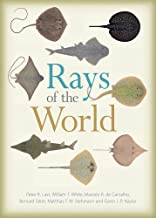 rays outdoor world