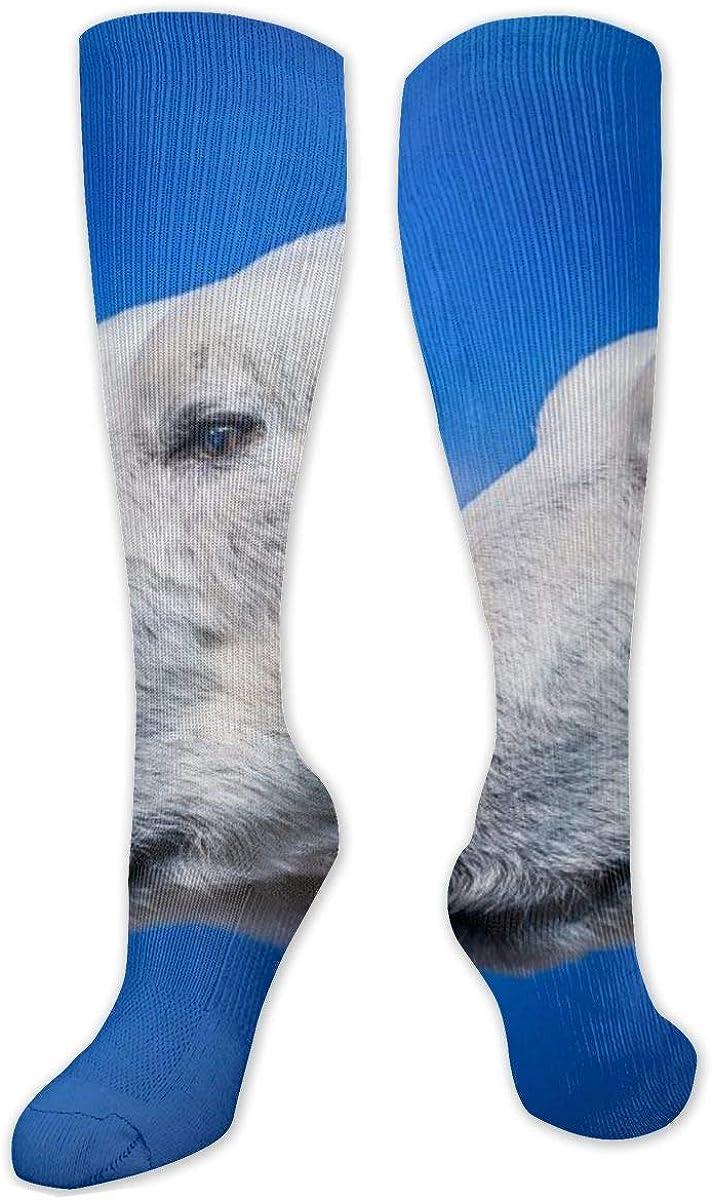 Polar Bears Head Knee High Socks Leg Warmer Dresses Long Boot Stockings For Womens Cosplay Daily Wear